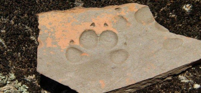 Latmos'ta Bin Yıllık Hayvan İzi
