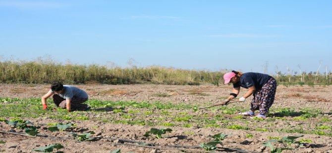 Aliağa Toprak ve Tarım Atlası İçin Çalışmalar Başladı