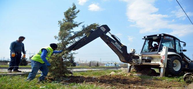 Aliağa Belediyesi Ağaçlandırma Çalışmalarına Ara Vermiyor