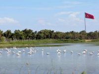 Aliağa Kuş Cennetini Flamingolar Renklendiriyor